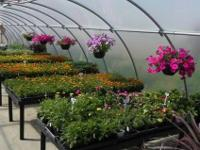 Sale Starts Saturday June 23: 50% off ALL Plants: Great