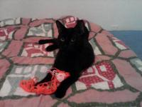 Very Loving, Friendly Female Black Cat With Big Green