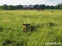 540 acres of working cattle ranch with excellent