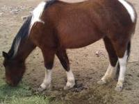 I have four horses for sale: 2 and 1/2 year old brown