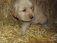 We have one adorable girl left! She is American Canine