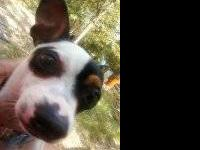 I have a male chihuahua he is one yr old , housebroke
