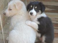 All 4 Saved new puppies have discovered fantastic,