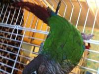 I have a 1 yr old green cheek conure for sale. He's