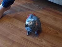 This young African grey parrot needs a new home as we