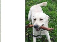 Bailey is an energetic, loving and playful fellow. He