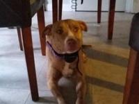 Bella is a breeding ready female looking for a