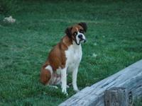 Looking for a home for our boxer, Laila. We are a very
