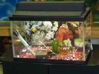 Hi I have a good condition fish tank with background,