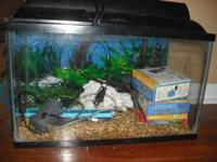 10 gallon fish tank comes with large and small rocks,