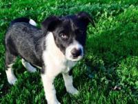 Hi Everyone,. I have 3 cute Labrador rat terrier mix