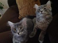 We are looking for good homes for our two kittens. We