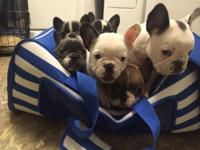 * 10 weeks aged! I have 5 new puppies offered available