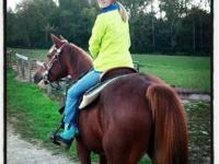 10 year old quarter horse mare for sale. Very sweet