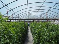 This 12 acre property with green houses could be your