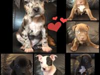 Are you looking for a Spectacular Puppy? Your search is