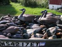 100 Duck and goose decoys. Mix of Mallard, wood duck,