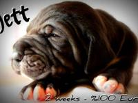 Jett & Fletcher are the last puppies available :) Price