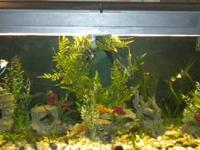 We have a 100 gallon tank full setup for sale. The