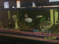 "I have a 100 gal freshwater tank(72""X17 3/4"" X20"")"