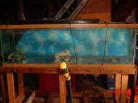 I have a 100 gallon fish tank with stand for sale if