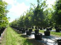 When purchasing and installing trees for your home