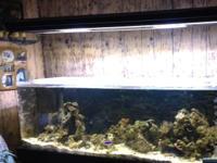 Complete 100 gallon aquarium with marine land light,