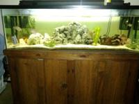 100 gallon aquarium with sturdy wood stand, 2