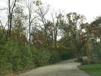Wonderful opportunity to own a wooded .80 acre lot in