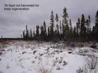 105 acres of land in Canada. Great hunting and fishing