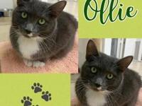My story This gorgeous guy is Ollie or as most staff