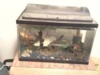 HELLO UP FOR GRABS I HAVE THIS 10 GALLON FISH TANK WITH