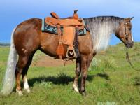 grulla paint 10 year old mare. spook proof, gentle,