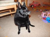 My cousin Amy is wanting to rehome her Schipperke that