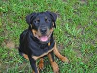I have a sweet young male rottweiler that needs a