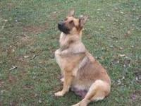 I have akc registered German shepherd pups 3 black and