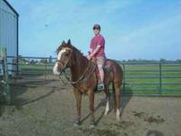 11 yr old AQHA registered sorrel gelding for sale. Well