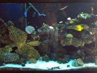 110 Gallon Saltwater Aqaurium For Sale, with stand,