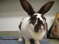 The rabbit adoption fee is $15. If you would like to