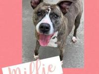 My story Hello! My name is Millie. I am a 4 year old
