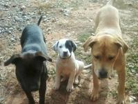 I have two beautiful Pitbull puppies up for adoption.