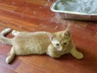 12 weeks old playful, litter box trained dad is
