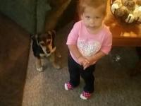 I have a 12 wk old beagle that I got for my family,