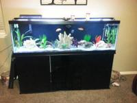 I have a very nice fish tank with everything you need