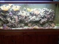 Imagine a reef tank aquarium where water changes are
