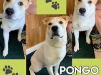 My story Hi There! My name is Pongo. I am a 2 year old