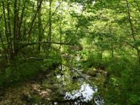 4.74 Acres of Rolling hillsides Wooded land with creek