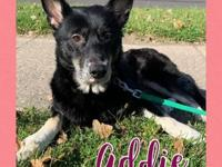 My story Hi There! My name is Addie. I am a 4 year old