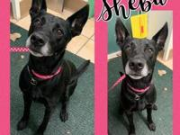 My story Hi There! My name is Sheba. I am a 6 year old