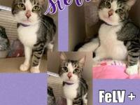 My story Sweet Sierra is a 3 year old spayed female DSH